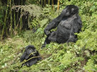 Agasha Group, Rwanda