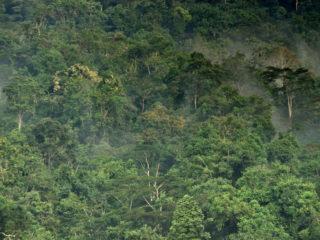 Uganda – The Impenetrable Forest 1