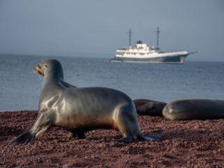 Sea-lion, Rabida Island