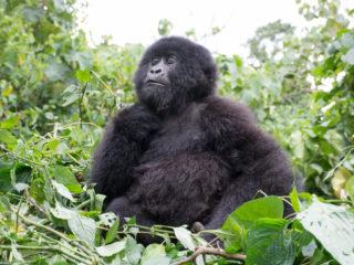 Congo DRC